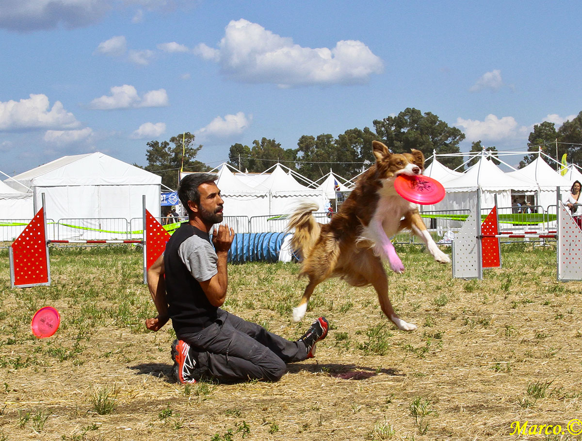 agility-disc-dog-game-fair-1