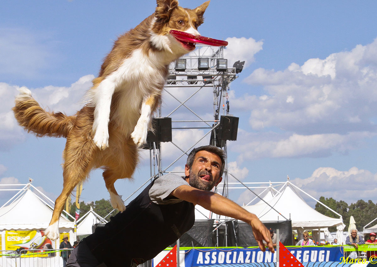 agility-disc-dog-game-fair-3