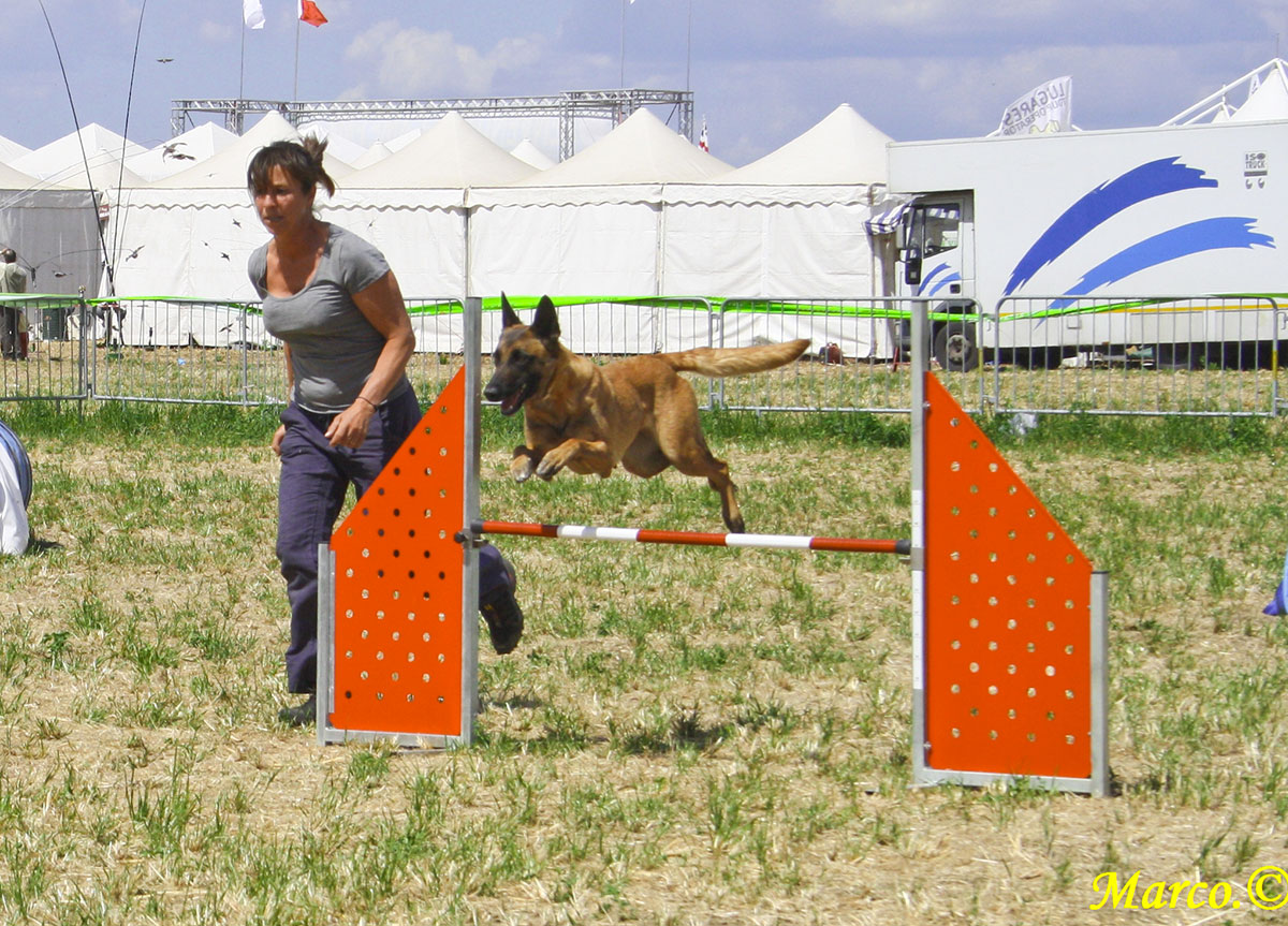 agility-disc-dog-game-fair-4